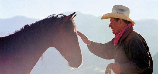 Horse Sense and Healing