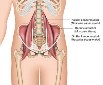 TRE: Psoas-Muskelgruppe